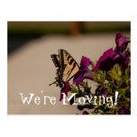 Swallowtail in the Petunias Postcard