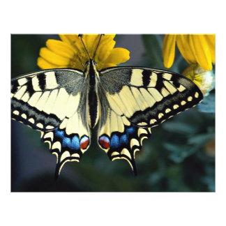 Swallowtail, machaon de Papilio Flyer A Todo Color