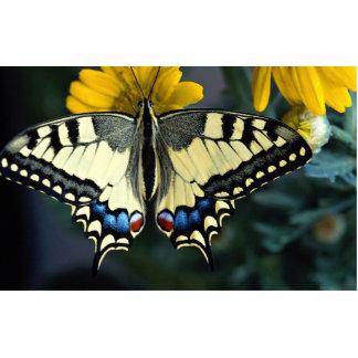 Swallowtail, machaon de Papilio Fotoescultura Vertical