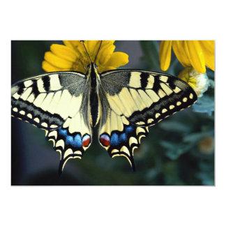 Swallowtail, machaon de Papilio Comunicado