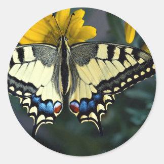 Swallowtail, machaon de Papilio Pegatina Redonda