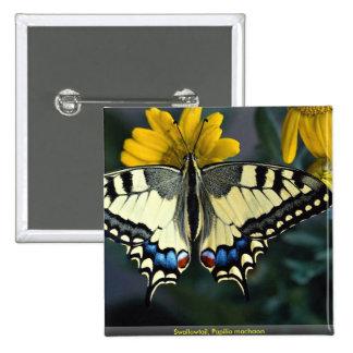 Swallowtail, machaon de Papilio Pins