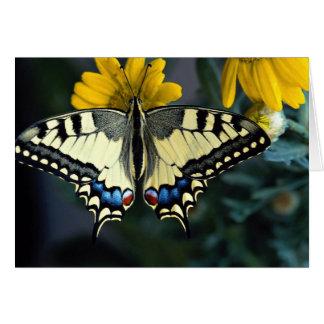 Swallowtail, machaon de Papilio Tarjetas