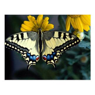 Swallowtail, machaon de Papilio Postal