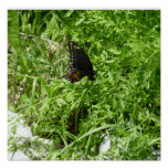 Swallowtail Midflight Impresiones