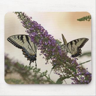 Swallowtail Mousepad
