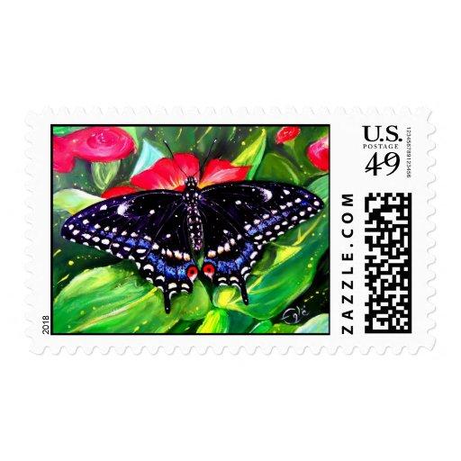 Swallowtail negro