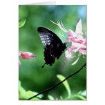 Swallowtail negro (2) felicitacion