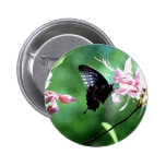 Swallowtail negro (2) pins