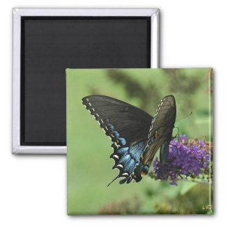 Swallowtail negro 9.05-1 iman para frigorífico
