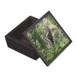 Swallowtail negro cajas de joyas de calidad