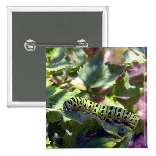 Swallowtail negro Caterpillar 1 botón
