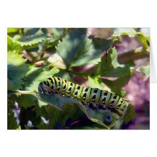 Swallowtail negro Caterpillar 1 tarjeta de felicit