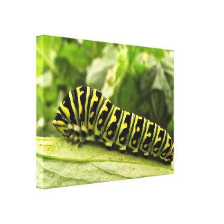 Swallowtail negro Caterpillar Impresión En Lona