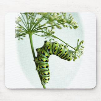 Swallowtail negro Caterpillar que come el perejil Alfombrilla De Ratones