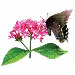 Swallowtail negro en Lantana rosado Escultura Fotográfica