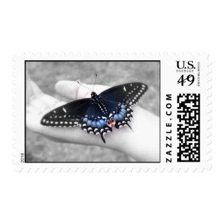 Swallowtail negro franqueo