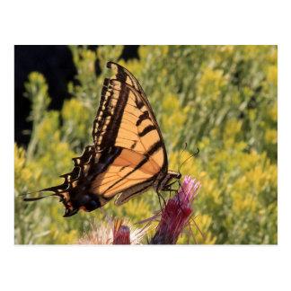 Swallowtail occidental del tigre tarjetas postales