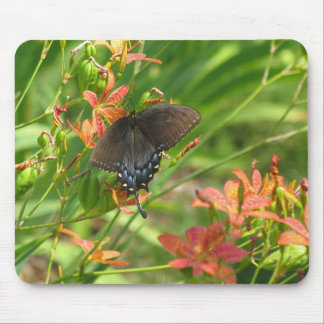 Swallowtail on Blackberry lillies Mouse Mats