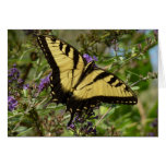Swallowtail on Butterfly Bush Colorful Nature Card
