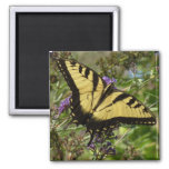 Swallowtail on Butterfly Bush Colorful Nature Magnet