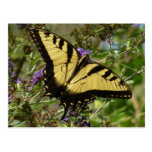 Swallowtail on Butterfly Bush Colorful Nature Postcard