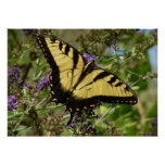 Swallowtail on Butterfly Bush Colorful Nature Poster