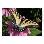 Swallowtail on Echinacea Greeting Card