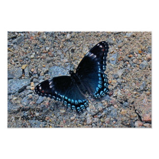 Swallowtail on Gravel Road Print