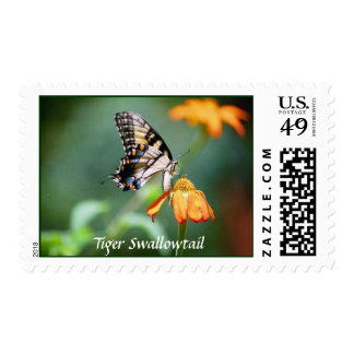 Swallowtail on Mexican Sunflower stamp