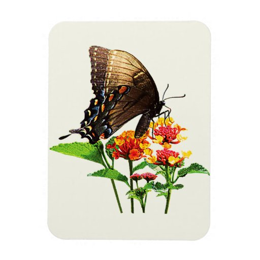 Swallowtail on Orange Lantana Rectangle Magnets