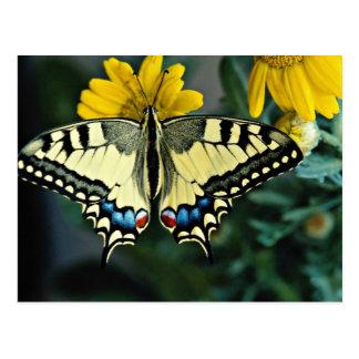 Swallowtail Papilio machaon flowers Postcard