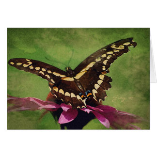 Swallowtail poised to fly card