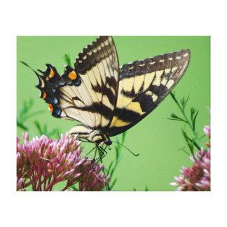 Swallowtail que sorbe impresión en lona