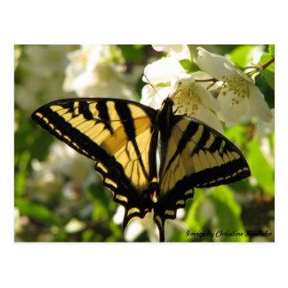 Swallowtail Sunlit en el naranja falso Tarjetas Postales