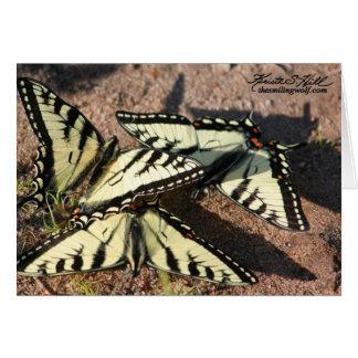 Swallowtail Trio Card