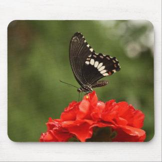 Swallowtail veteado alfombrillas de raton