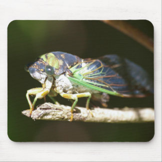 Swamp Cicada Mouse Pad