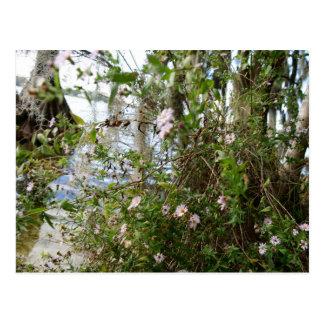 Swamp Flowers Postcard