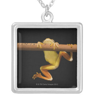 Swamp frog (Limnonectes Leytensis) Silver Plated Necklace