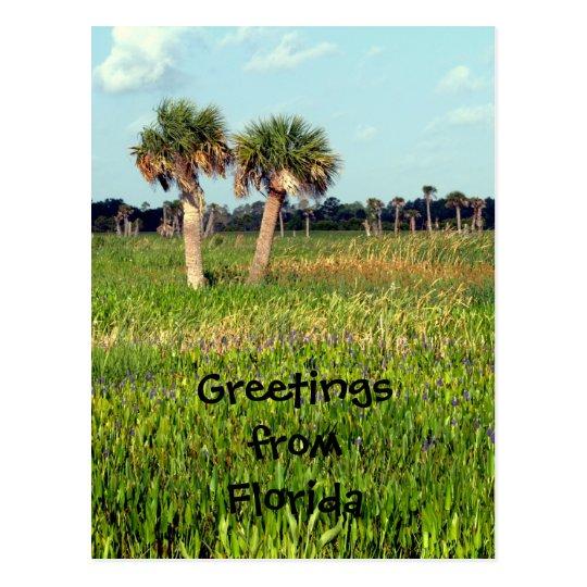 Swamp, Greetings fromFlorida Postcard