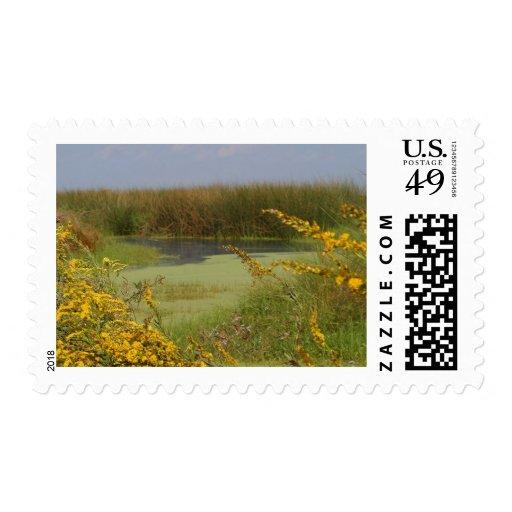 Swamp In Louisiana Postage