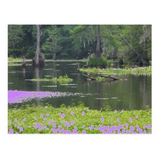 Swamp in purple postcard