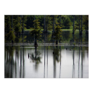 Swamp land poster