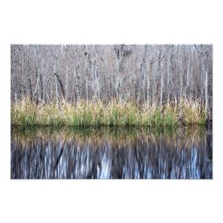 Swamp Reflection Photo Print