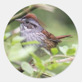 Swamp Sparrow Classic Round Sticker