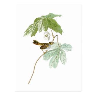 Swamp Sparrow John James Audubon Birds of America Postcard