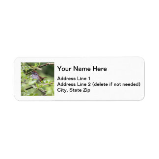 Swamp Sparrow Label