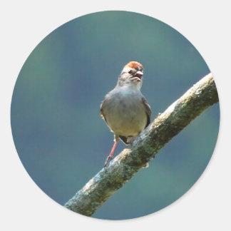 Swamp Sparrow sticker