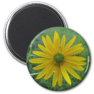 Swamp Sunflower Green Center Magnet